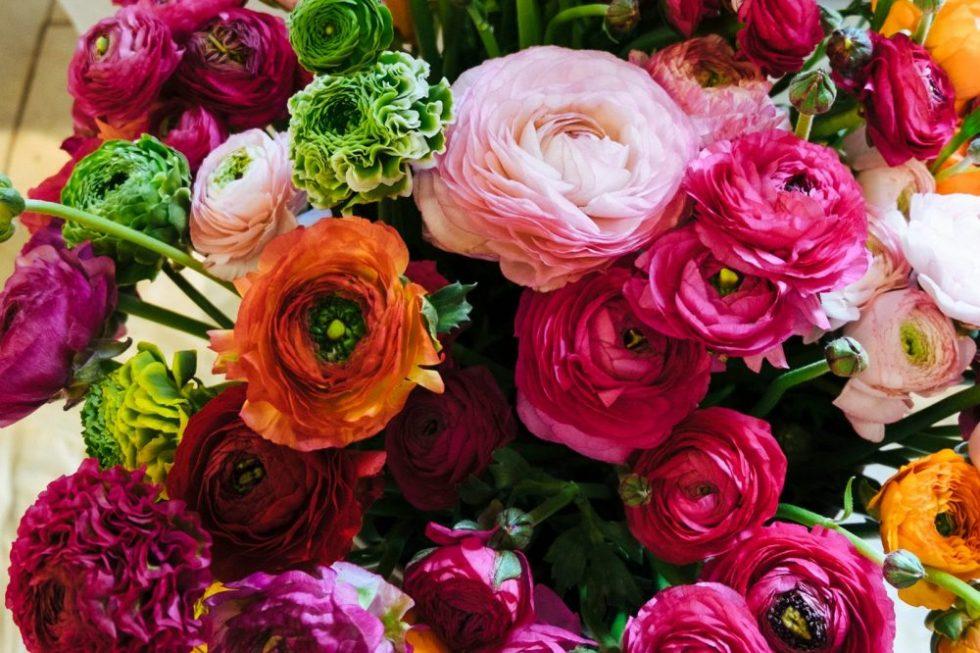 Blumen schmalzried neu frische ranunkeln for Pflanzen lieferservice